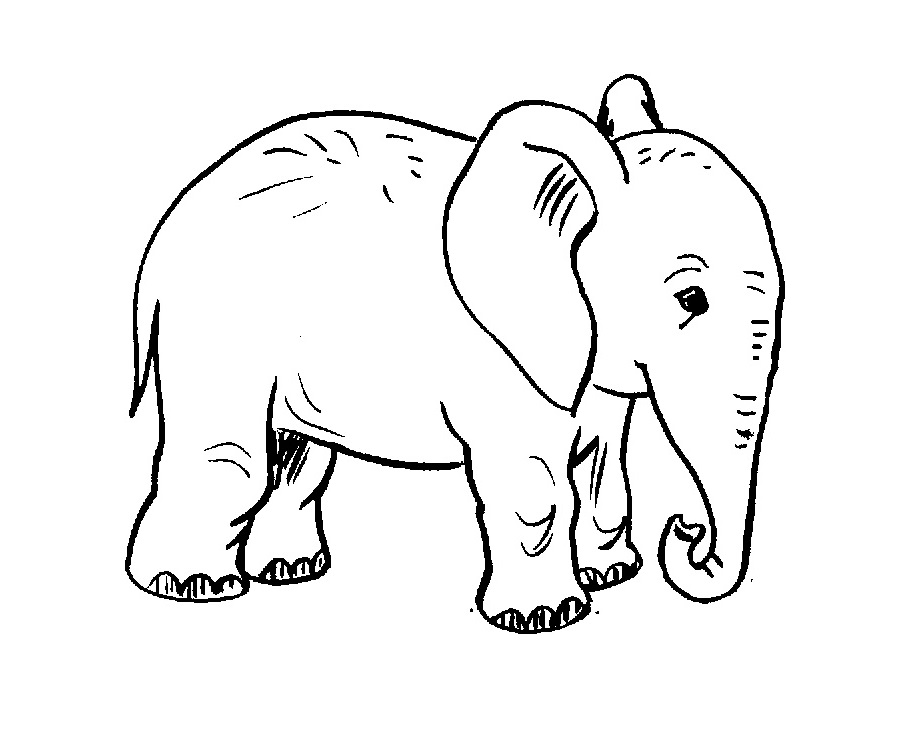 Free Printable Elephant Coloring Pages For Kids   755x913